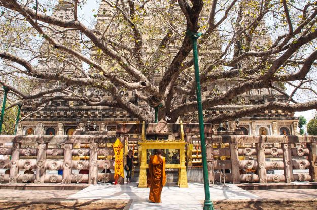 This tree is thought to be a direct decendant of the actual Bodhi tree that Buddha was sitting under when he achieved enlightenment.