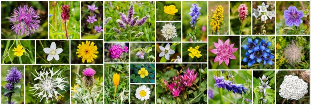 Collection of the photos we took of all the different wildflowers we saw along the way